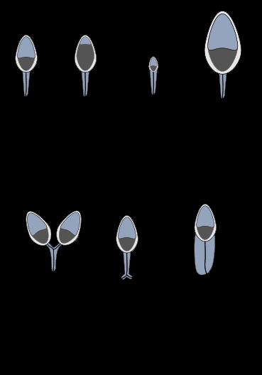Source: Xenzo/Wikipedia